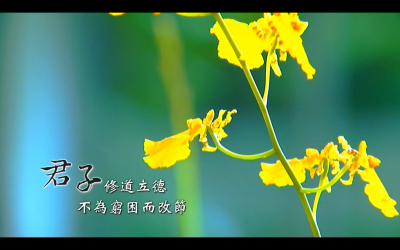蘭花。頂級手套集團